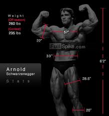 Arnold 3